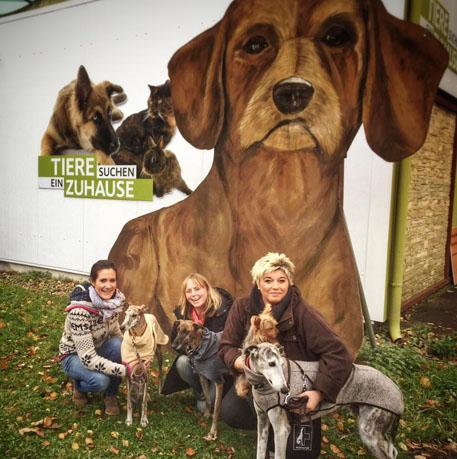TV-Tipp am Sonntag, den 27. November - Galgo Hilfe e.V. on