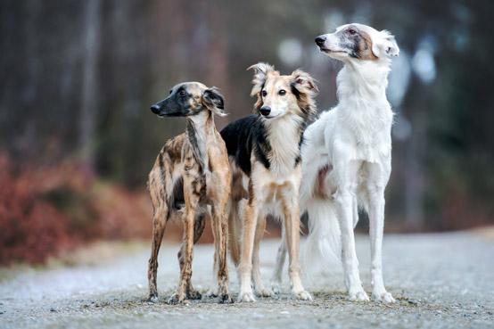 hundeschule vogt